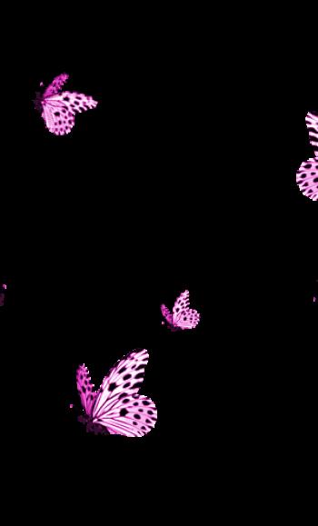 butterflyyyyyyy